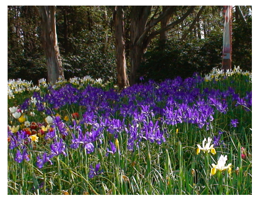 Blue flowers 1-irises.png