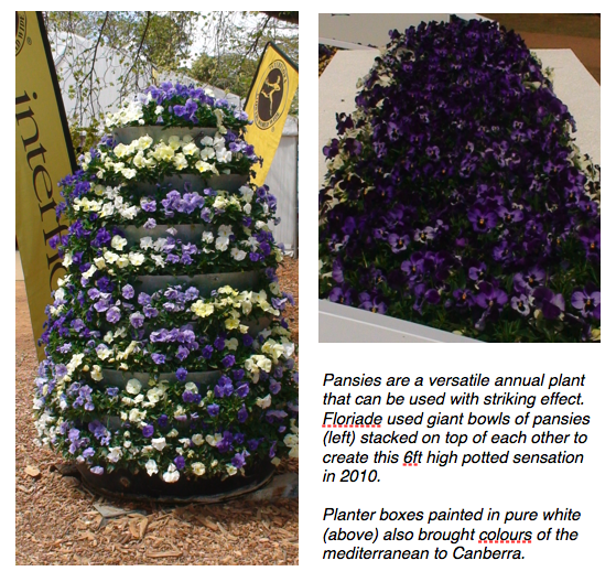 Blue flowers 2 - pansies.png