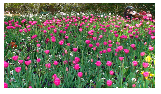 Pink Flowers 1.png