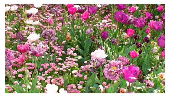 Pink Flowers 3.png