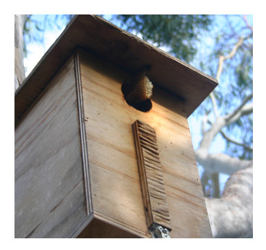 bee box.png