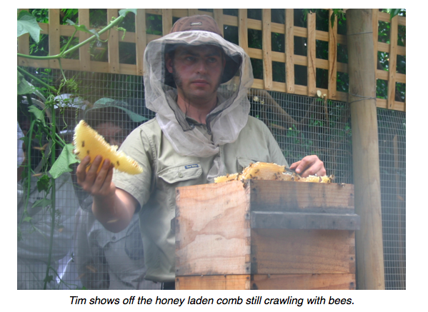 bees tim honey.png
