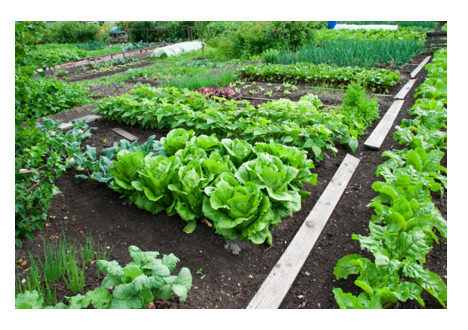 vegetable garden.png
