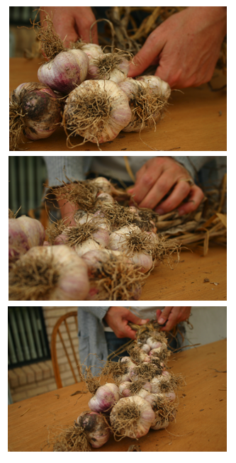garlic plaiting.png