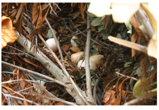 mulch eggs 2.png