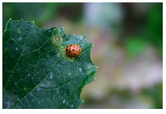 28 spotted ladybird.png