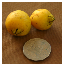 cherry guava fruit.png
