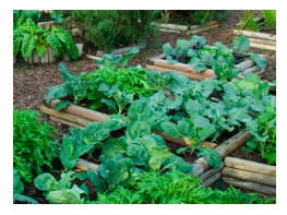 vegetable bed 2.png