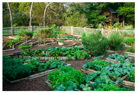 Vegetable Garden 2 Png